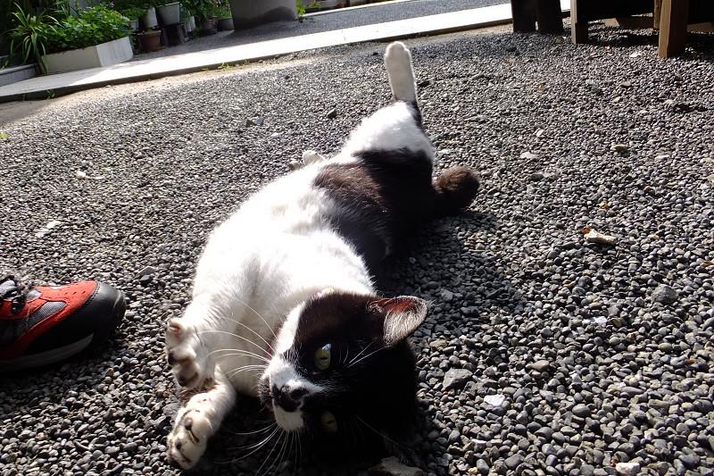 足下で横になって伸びをするネコ