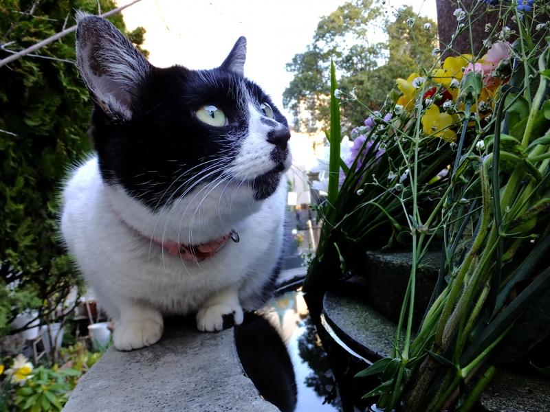 花束を見上げるネコ