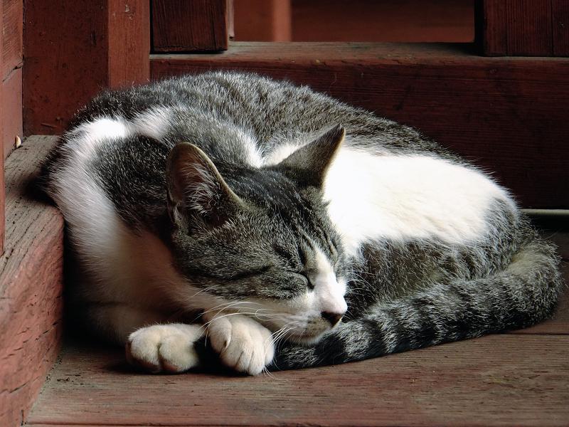 体を丸めて寝ているネコ