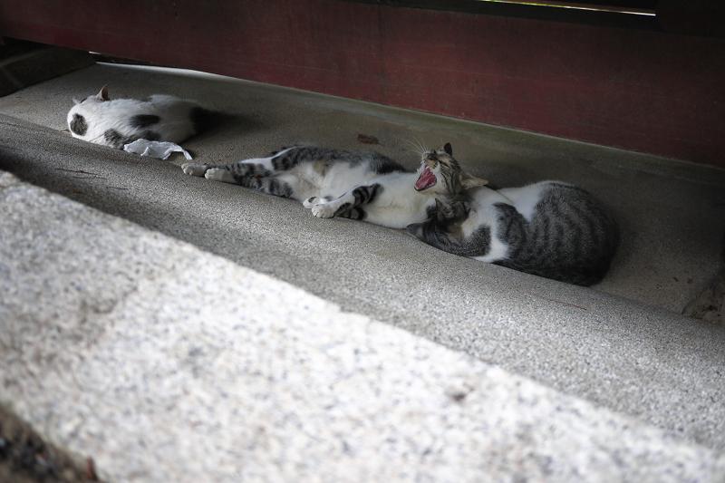 門の下で寝てるネコ