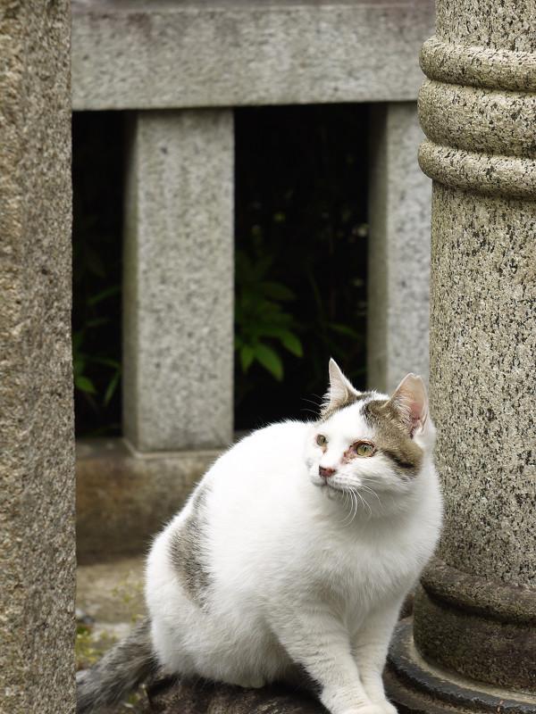 石灯籠の横で空を見上げてるネコ