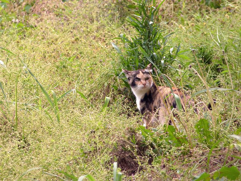 草原の中のネコ