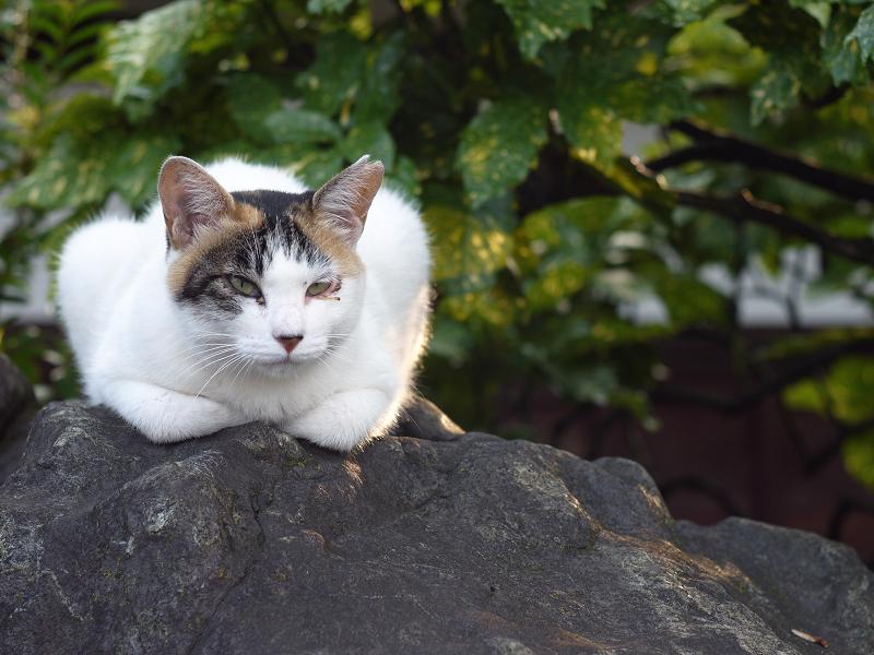 岩の上のネコ