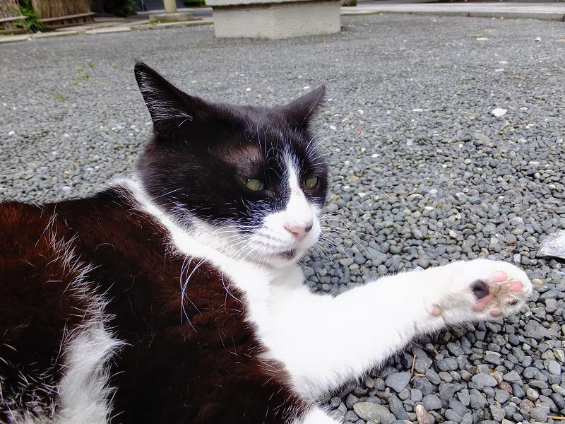 ギロッと睨むネコ