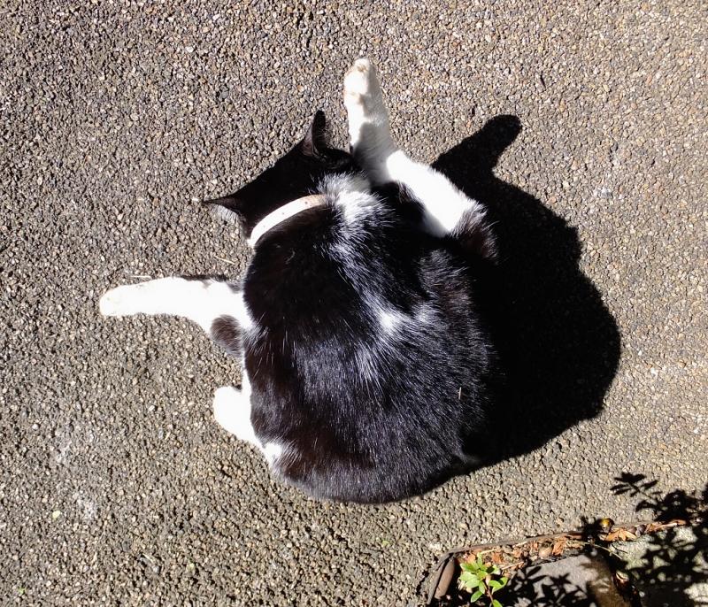 背中がテカテカ光ってるネコ