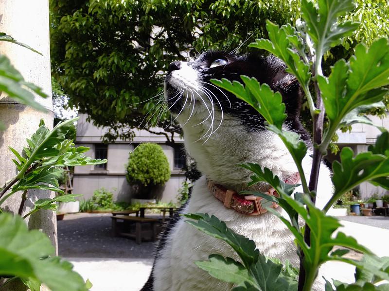 茂みから空を見ているネコ