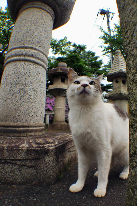 石灯籠の横で上を見ているネコ
