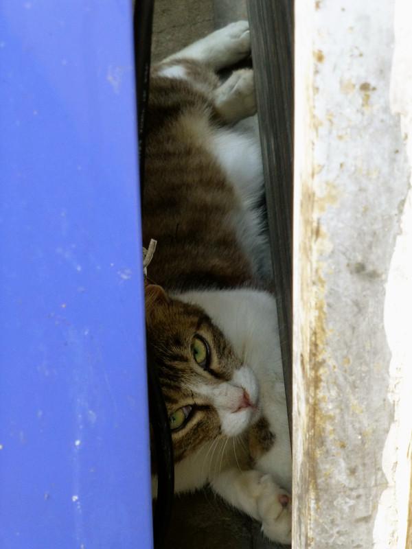 シャッターと自販機の間のネコ