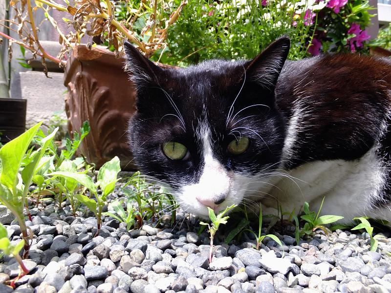 ニオイを嗅いでる猫