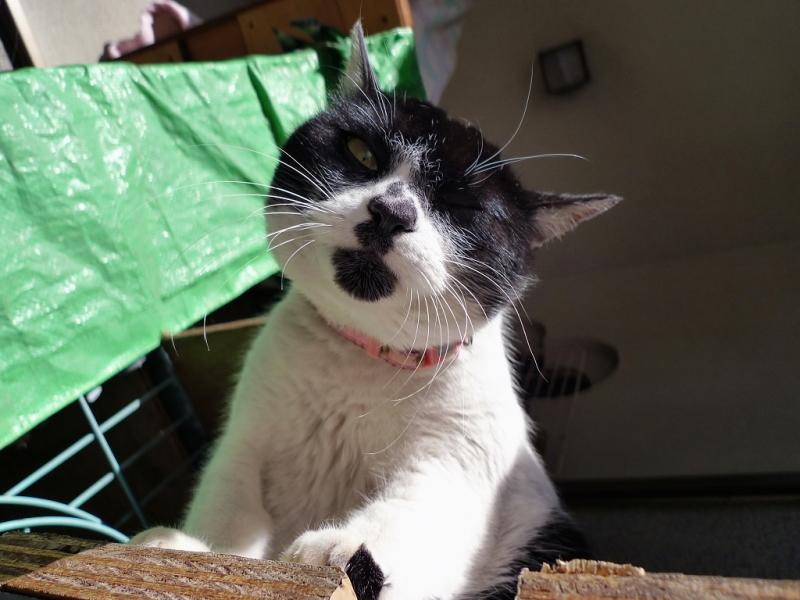 踏み台からカメラを見おろしてるネコ