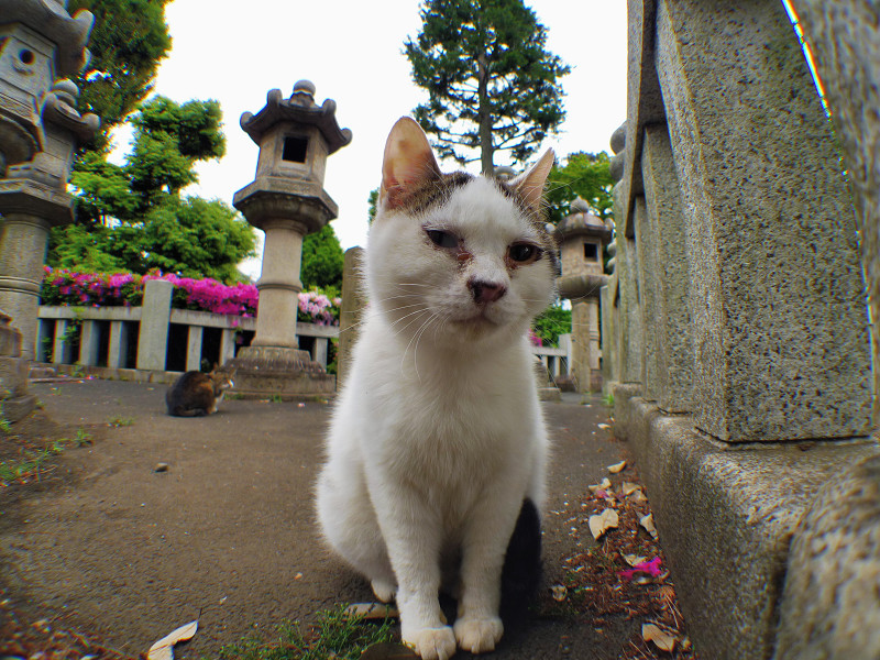 玉垣の奥にいるネコ