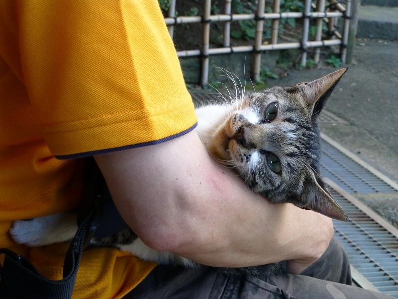 抱き上げられてるネコ