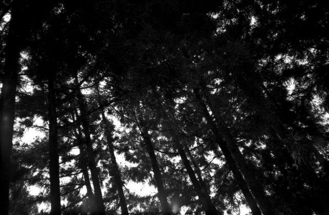 深山幽谷36f