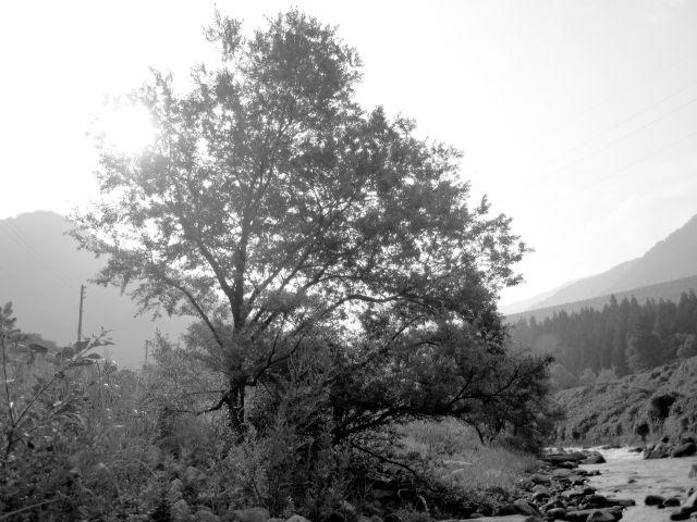 深山幽谷38a