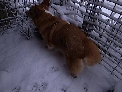 夕方の雪2