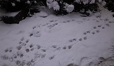 夕方の雪6