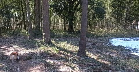 自然の森雪-3