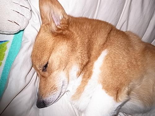 ぐっすりおやすみ
