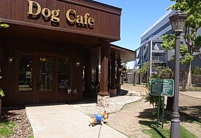 ペニーレインドッグカフェ