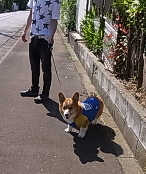 兄ちゃん散歩4