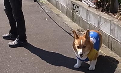 兄ちゃん散歩5