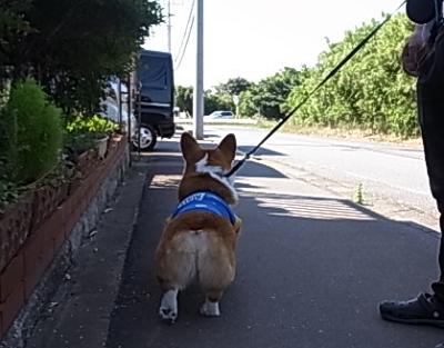 兄ちゃん散歩11