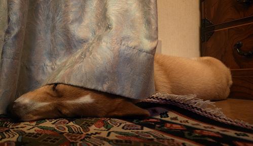 ゆっくりお休み