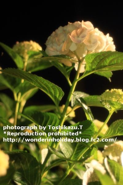 IMG_2482d.jpg