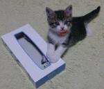ティッシュ箱と猫