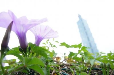 taiwan15-87