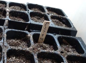 トマトの種まき140727