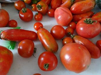 トマト140817