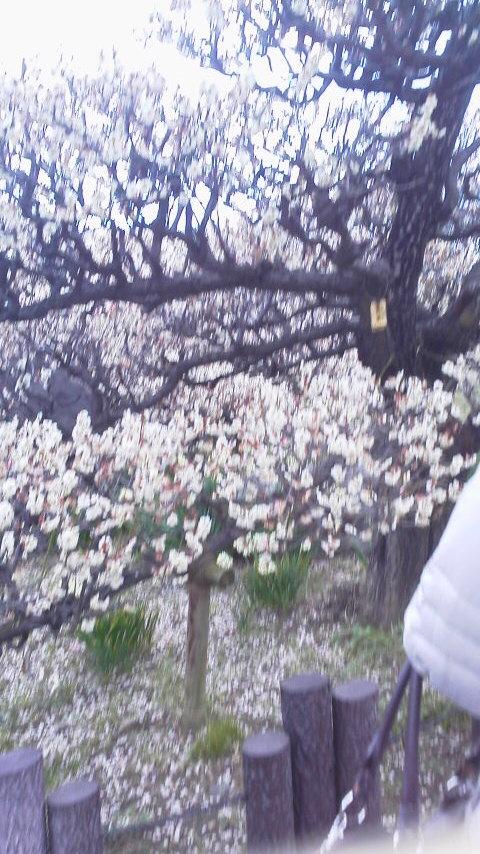 大阪城の梅1