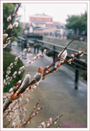 blognekoyanagi.jpg