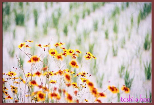 blogtanbo.jpg