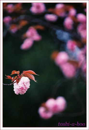 blogyaeno.jpg