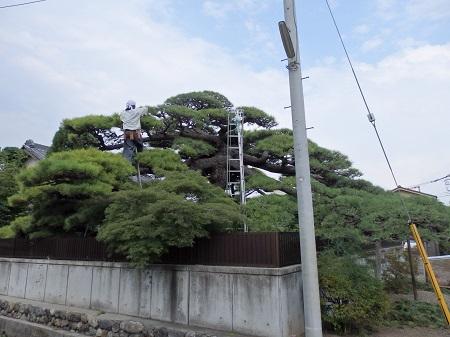 big松 003