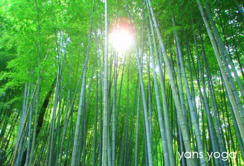 yans_yoga_image01.jpg