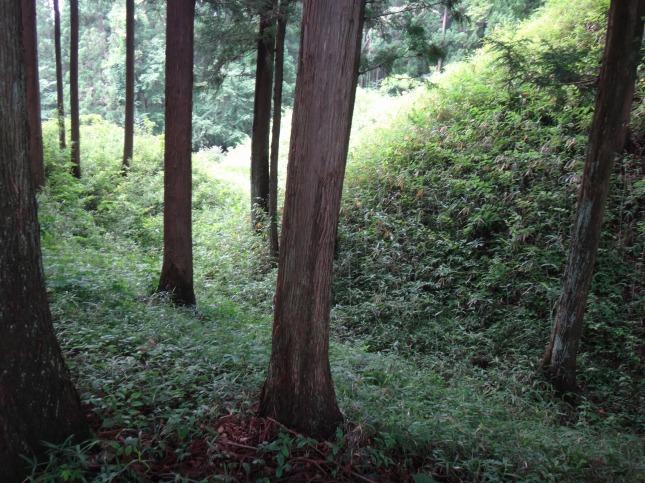 s-DSC01420.jpg