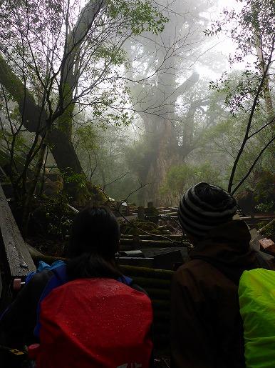下から仰ぎ見る縄文杉