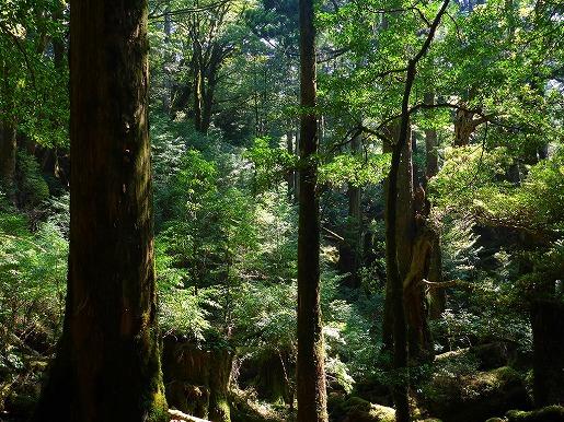 写真5 天文の森