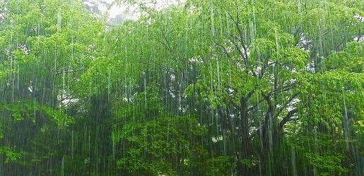 写真2 ラッキョウ雨