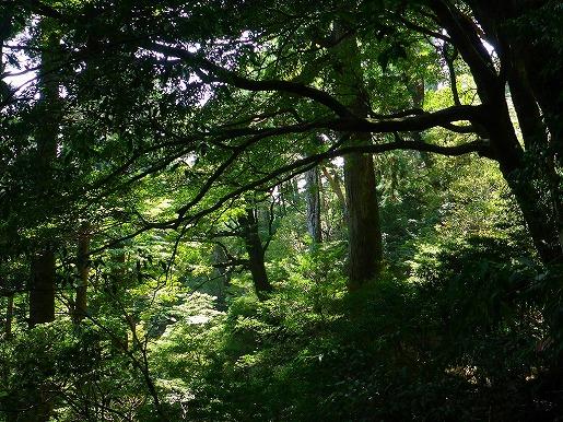 写真6 木の目線