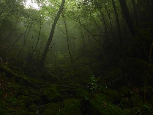 6月19日 白谷雲水峡 霧の森