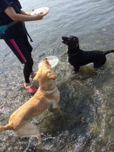 川遊び ココ