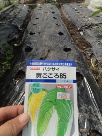 6907hakusai (3)