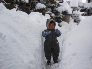 H260215大雪で育穂