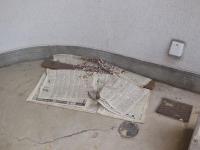 H260525農協のツバメの巣の下