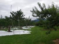 H260827収穫終了の白山