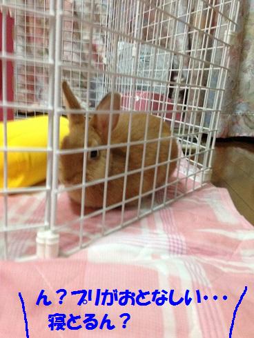 IMG_3639.あくび